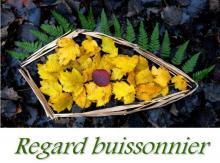regard buissonier